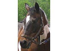 Cherokee-Closeup