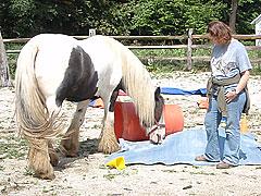Horses-(20)