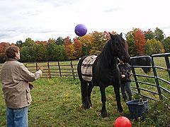 Horses-(40)