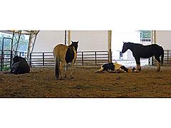 Horses-Down-(5)