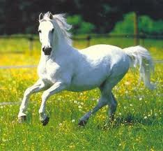 White Horse Dancing